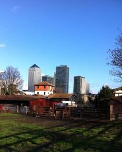 Canary Wharf from Surrey Docks Farm