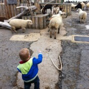 Surrey Docks Farm revisited