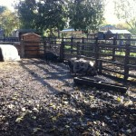 Pigs at Stepney City Farm