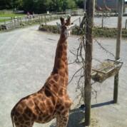 Folly Farm Adventure Park & Zoo, Pembrokeshire, Wales
