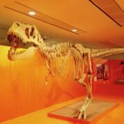 Dinosaurs: Monster Families, Horniman Museum & Gardens
